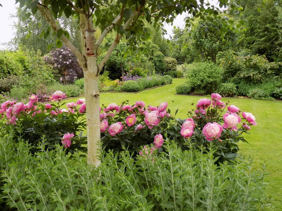 a peony garden in Horton, Somerset