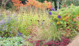 an autumn border with aconitums and sedums