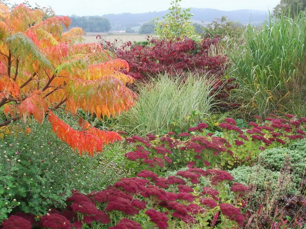 wonderful autumn colour in a Somerset border
