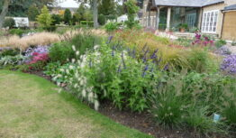 a grass and salvia border in September