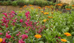 a new cottage garden border with penstemons and marigolds