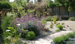 lavender and wallflower gravel garden