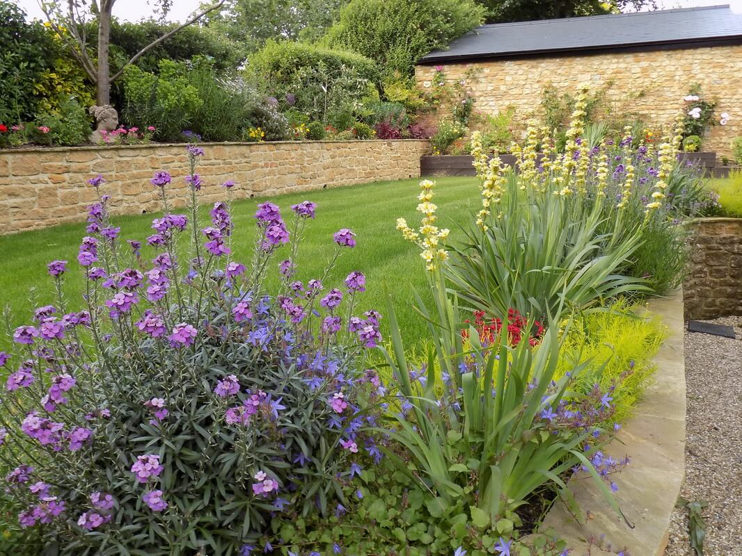 perennial wallflowers and sisyrinchium border