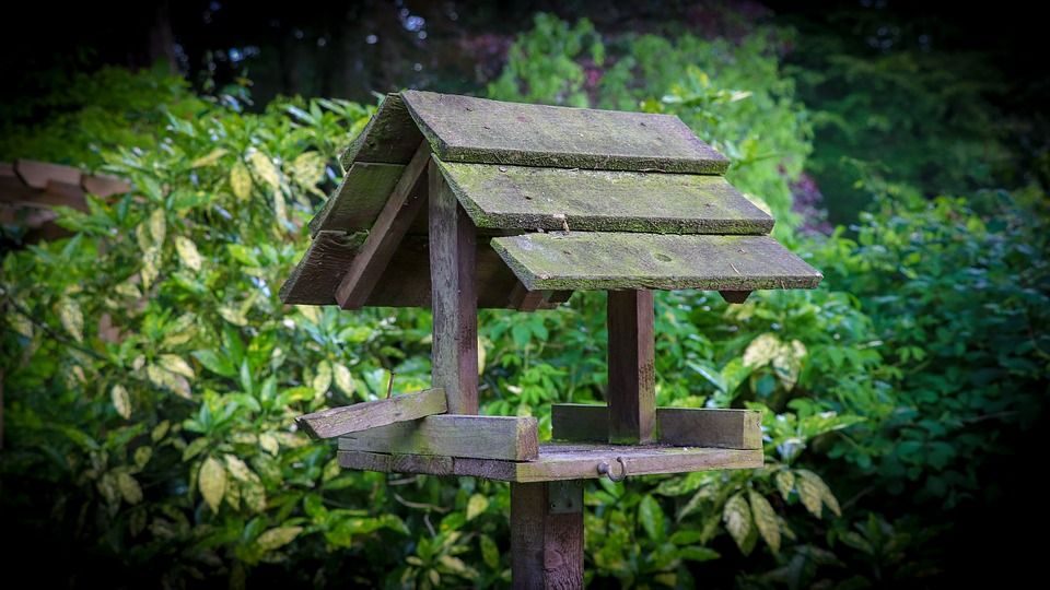 garden bird table